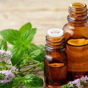 Tinh dầu hương nhu nguyên chất